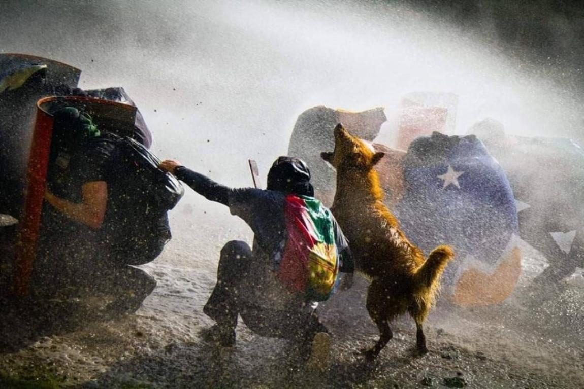"""Imagem de """"Rucio Capucha"""", o valente cão de rua lutando ao lado dos manifestantes no Chile"""